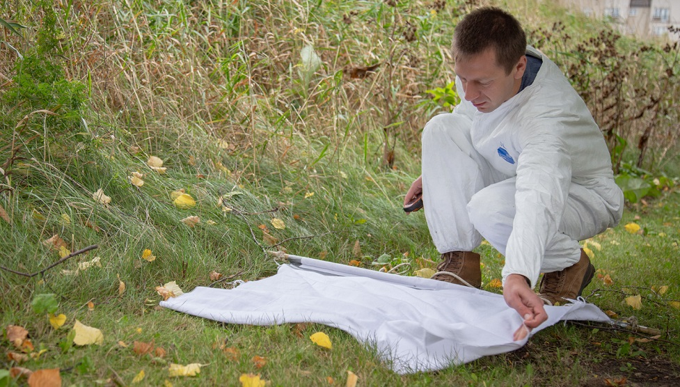 Man searching for ticks in the grass