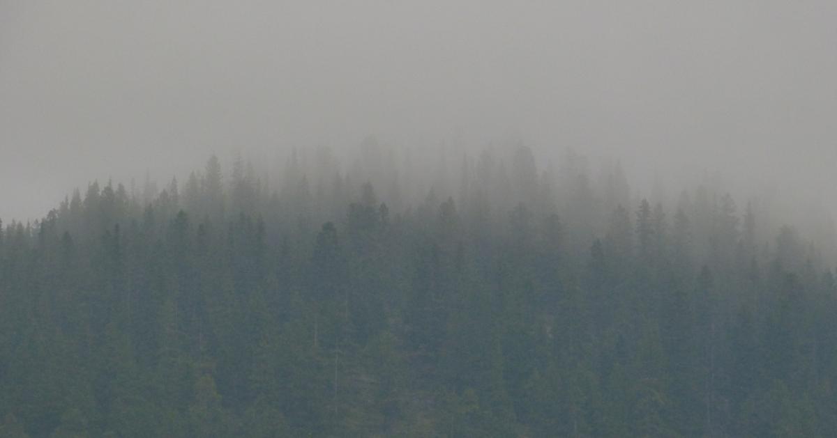 Fumée épaisse dans une forêt