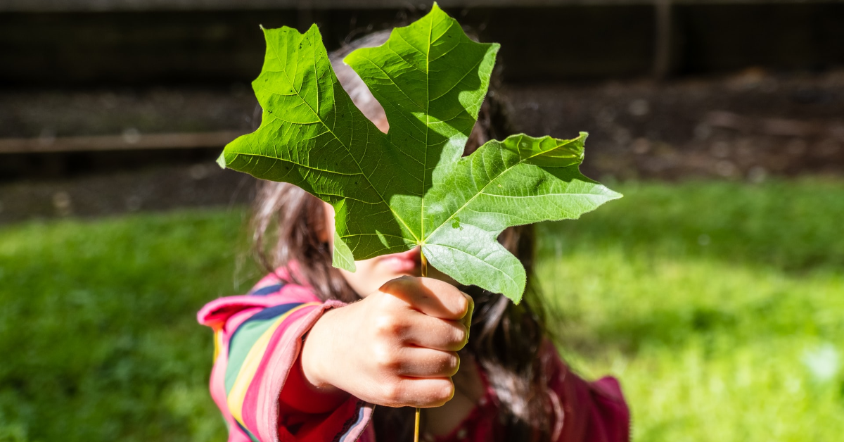 A kid holding a maple leaf