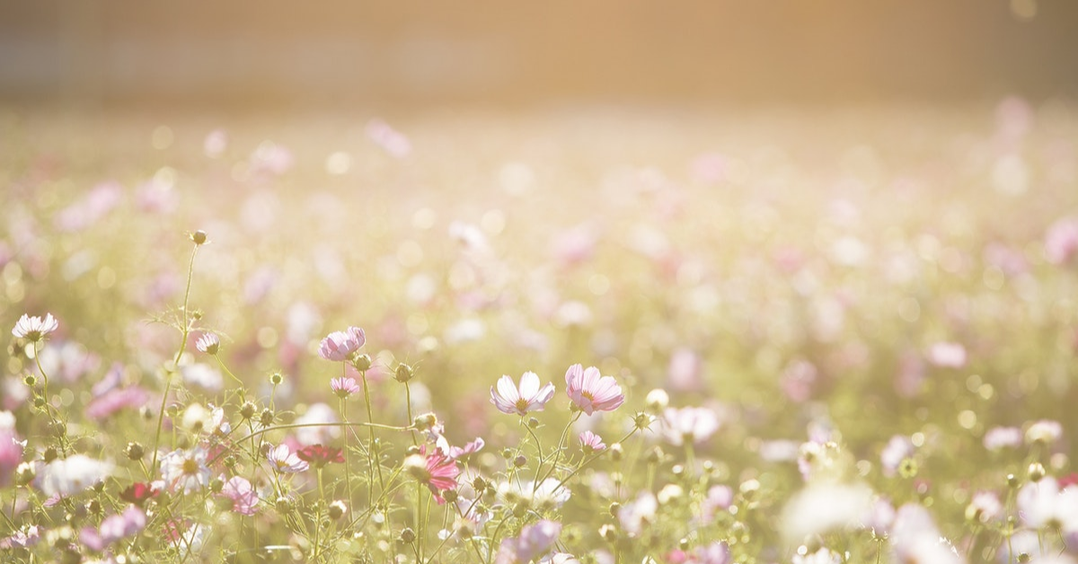 Field of native flowers.