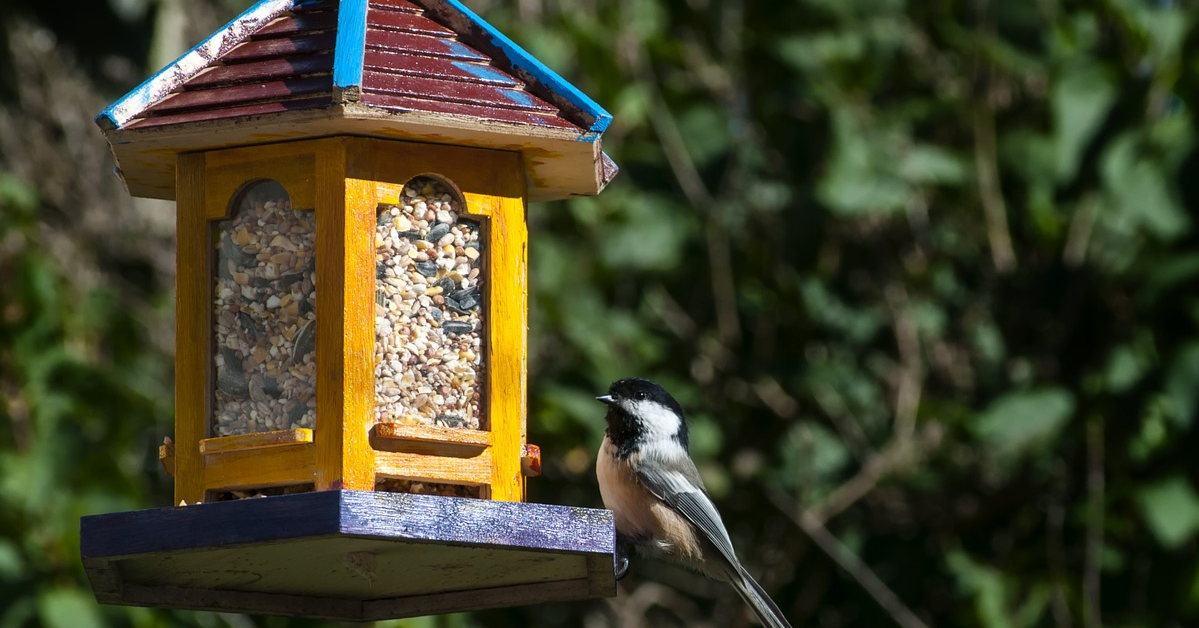 A chickadee perched on a feeder.