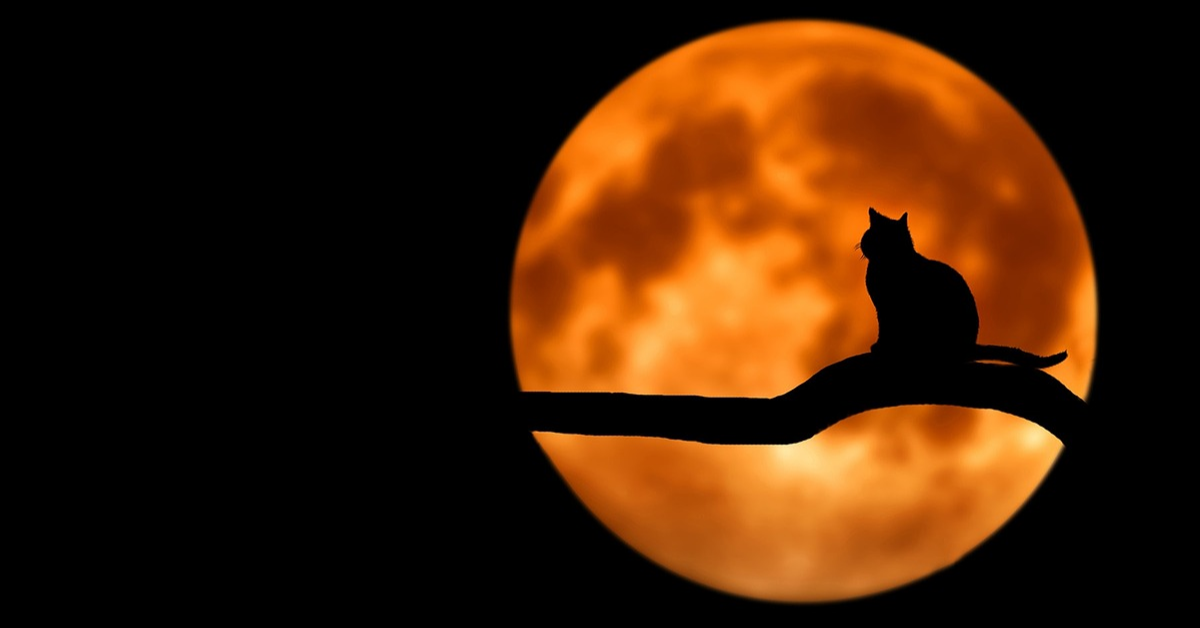 A cat in front of a Full Moon.