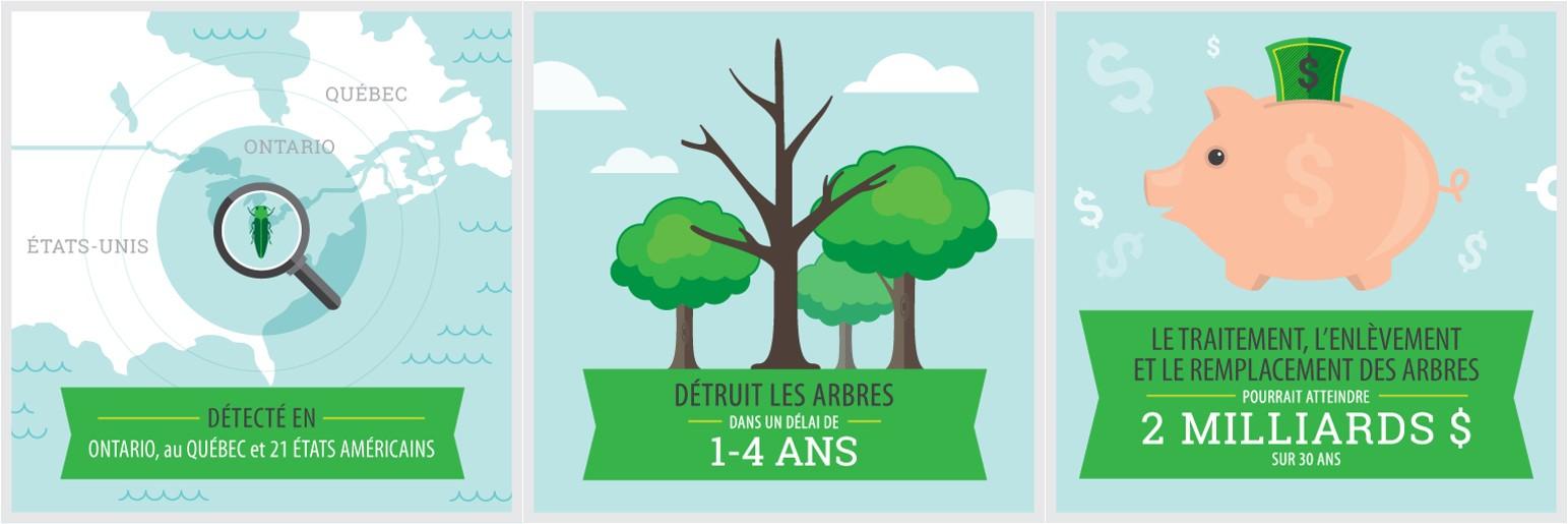 Détecté en Ontario, au Québec et dans 21 États américains / Image d'un arbre mort: détruit les arbres dans un délai de 1 à 4 ans / Image d'une banque: Le coût pour traiter, enlever et remplacer les arbres pourrait atteindre 2 milliards $